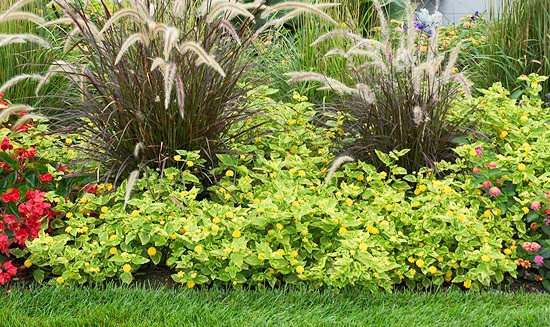 The garden border jenny 39 s home improvement for Tall grass border